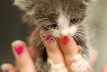 Felines / by Margie Dassler