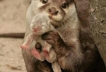 Cuddles, Derps, & OMG IT'S SO FLUFFY! / Cute & Cuddly -  Things that make ya go Awww