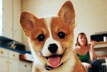 What a cutie:)