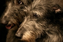 dog shots / ~love wrapped in fur~ / by sherrie