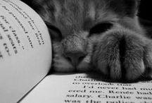 Cats & Books