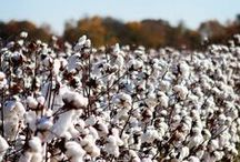 Cotton Pickin' Roots