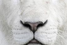 irresistable animals