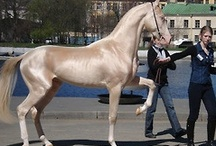 Equine examples, breeds, colors, beauty
