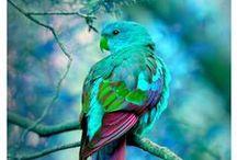 Colors / Colors, of course!