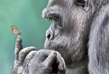 Animals R Cool / by Bijou Galletti