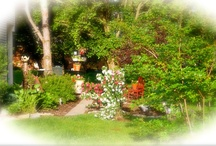 Nick and my gardens / Our garden we have been working on. / by Susan DeBow