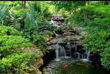 Creating a Koi Pond