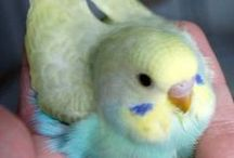 Parrots and other cuties
