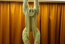 Cruise Ship Towel Animals / Submitted by Ship Mate Cruise App users