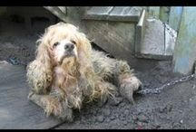 UNCHAIN YOUR DOG / PLEASE SIGN & SHARE TO END DOG CHAINING!  It only takes a moment - to end a LIFETIME of suffering!  Thank you!   https://www.change.org/p/please-sign-share-to-end-dog-chaining-take-a-moment-to-end-a-lifetime-of-suffering-thank-you?recruiter=116206585&utm_source=share_petition&utm_medium=facebook&utm_campaign=share_facebook_responsive&utm_term=des-lg-no_src-custom_msg&utm_content=rp_petition_fb_share_desc%3Acontrol