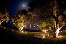 Vineyard Wedding  / by Kacey Lester