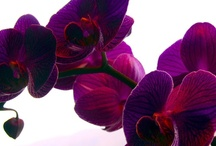 Orchids and Plants / by Pato Morado