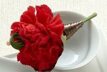 Carnations / Serving as a popular choice of flower, carnations are filled with beauty and colour.