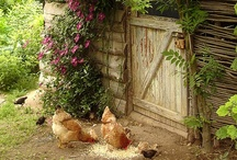 Poules / by Kimberly