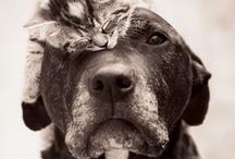 Doggie Dogs & Feline Fancies