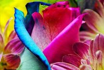 Flowers  / by Gina Copestick