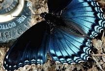 Butterflies / by Gina Copestick
