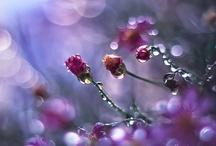 Raindrops and Rainbows / by Kimberly