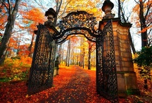 Gates / by Gina Copestick