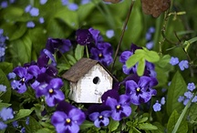 For the Garden & Gardening / ♥ I Love Gardening! (& Flowers & Purple!) ♥ / by Claudia Womack ❀