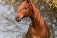 Equine / by Izzy