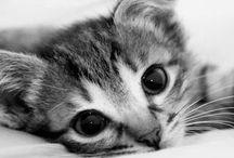 cute! cute! cute!!!! / by Kaori z