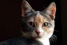 Kitties / by Valentina OS