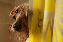 Mundo animal / by Jane Schmidt