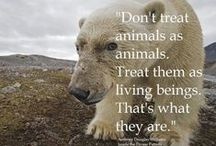 Wild Animals & Endangered Species / by Melanie DeLomba