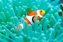 Clown Fish / by MacKayla Testerman