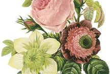 Botanical Inspiration / Inspired by the RHS Chelsea Flower Show a bouquet of inspirational ideas celebrating botanical art