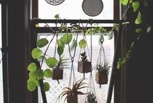 Garden / by Hannah Maier