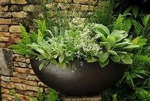 container gardening / by Phyllis Howell