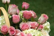 Flowers / Flowers for all occasions We pick the best merchants for our flower page   ,Birthday Specials Get special offers and discounts  http://www.planetgoldilocks.com/flowers.htm
