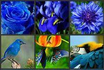 colour pallete blue-green
