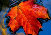 autumn / by Phyllis Howell