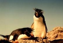 Isla Pingüino, Santa Cruz