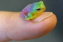 Frogs / Frogs, everything to do with frogs http://www.planetgoldilocks.com/pets.htm