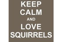 """SQUIRREL!!!!!! / It all started with a silent auction at a local nursing home; the birth of  the """"nut at office"""" phenomenon. / by Carrie Burke"""