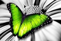 Colour : Splash of .... / Splash of Colours against black & white