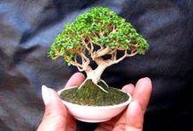 Fairy & Miniature Gardens / by CreatedWithFire Studios & Designs