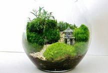 Garden - terrarium / love mos and orchids in smal glashouse, vases and domes