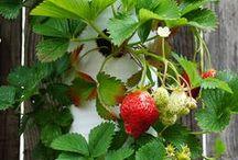 Garden - vegetable / how to grow stuff on balcony