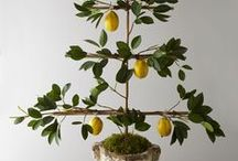 Art of Espalier / by French Antiques