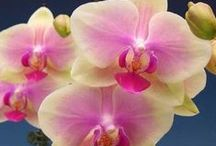 Garden - Orchids care / Orchids of other people and tips for care