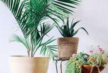 - Plantes Lover -