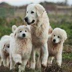 Der Hund - Canis lupus familiaris