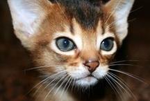 I Thought I Saw A Kitty Cat / by Kim Rodkey