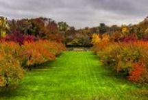 Visitor Photos / See Brooklyn Botanic Garden through the eyes and lenses of our visitors.
